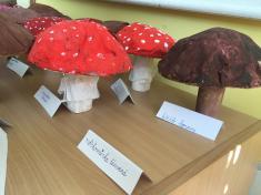 Naše houby